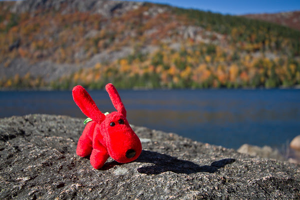 Rover posing on a rock, Jordan Pond