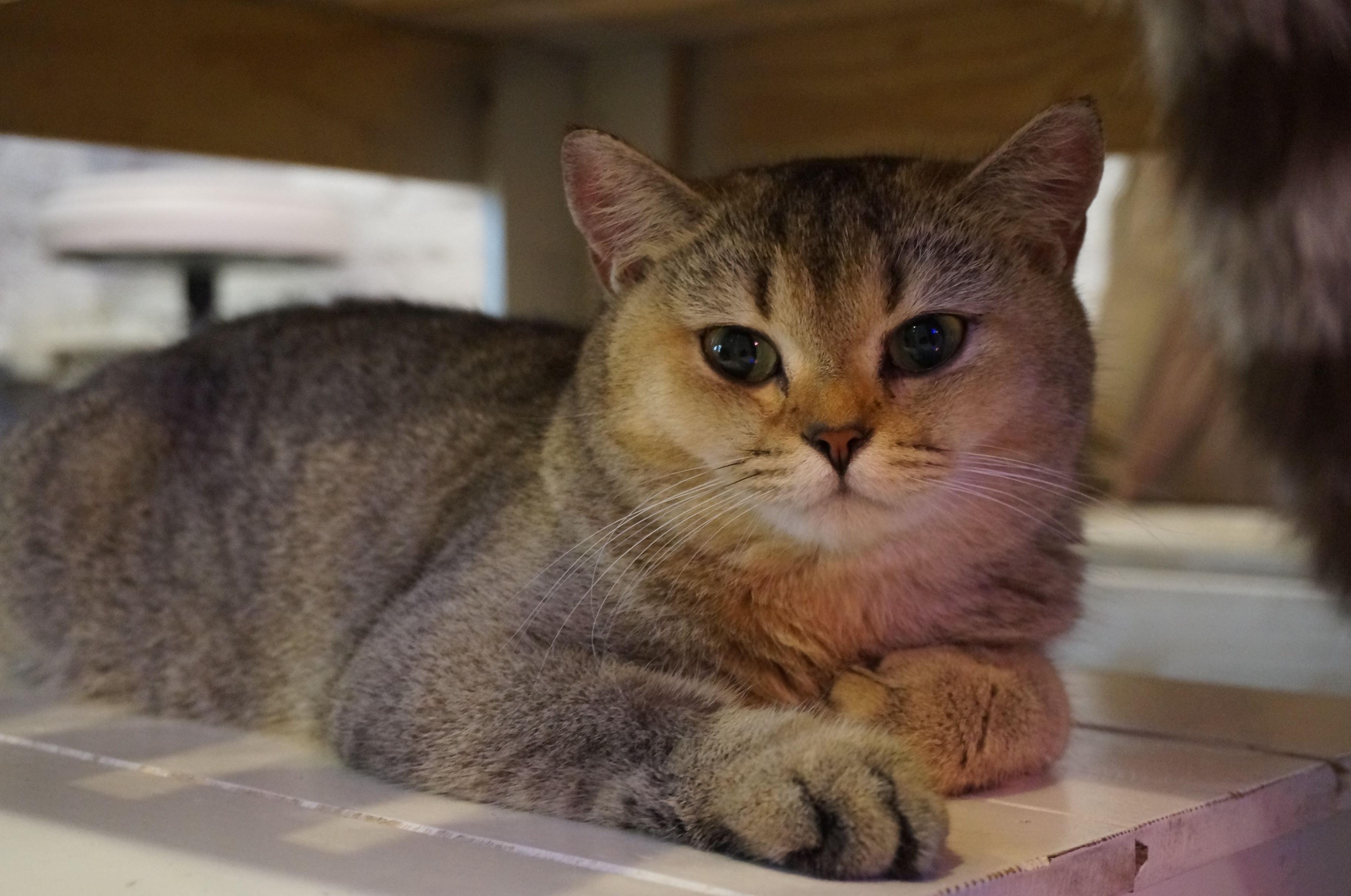 Download 99+  Gambar Kucing Sedang Menangis Paling Keren HD