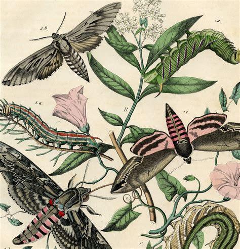 Vintage Bohemian Moth Print!   The Graphics Fairy