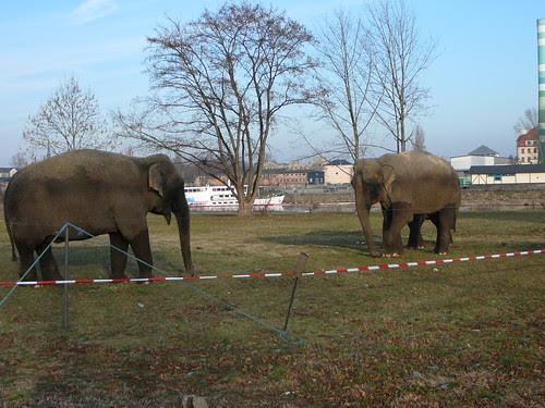 Elefanten des Zirkus Busch-Roland (01)