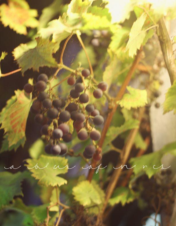photo autumn4_zps8837173c.jpg