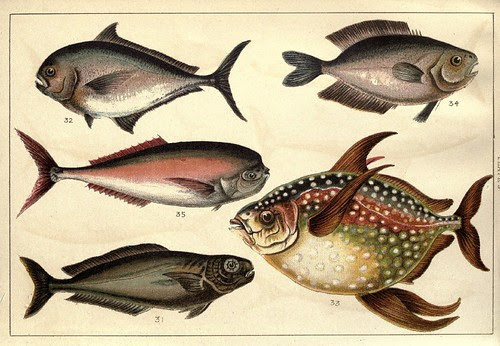 Our country's fishes and how to know them - a guide to all the fishes of Great Britain WJ Gordon 1902 n