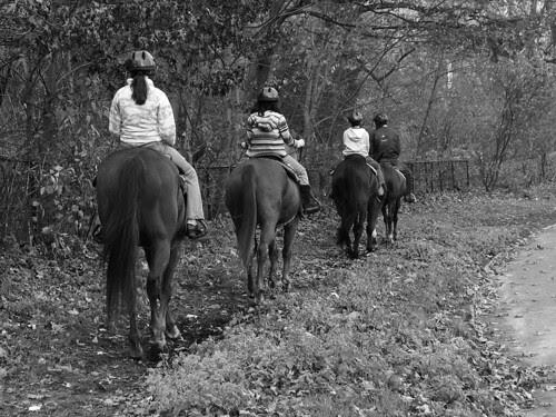 Horses Prospect Park
