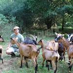Saint-Andeux | Saint-Andeux : son élevage de chèvres est menacé après une attaque de chiens
