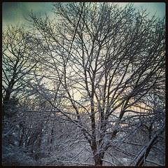 Good Morning! #FirstDayOfSpring #newengland #snow #spring