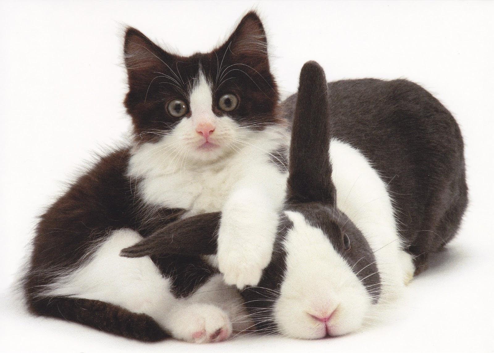 Download 61+ Gambar Kucing Dan Kelinci Keren Gratis