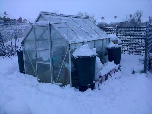 Greenhouse in snow Jan 13