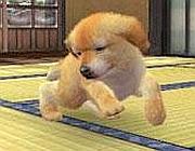 Uno dei cuccioli virtuali di Nintendogs