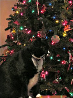 Waiting for Christmas to start