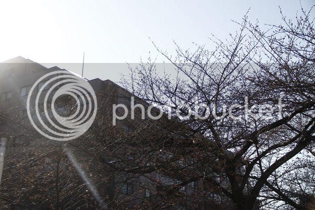 photo _MG_5930_zpstdapgqek.jpg