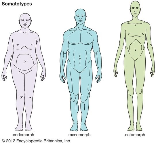 Types of physique:Ectomorphic, mesomorphic, Endomorphic. Which type of body you want ?