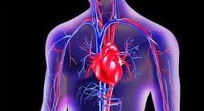 Coração (Foto: BBC)