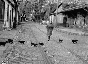 cats_300