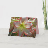 Amaryllis Flower Card card