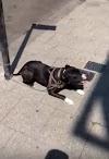 Trató de ayudar a un perrito que estaba expuesto a sufrir quemaduras, pero el dueño lo insultó