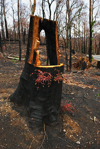 Beechworth bushfire, Victoria, Australia IMG_4903_Beechworth_Fire_2009