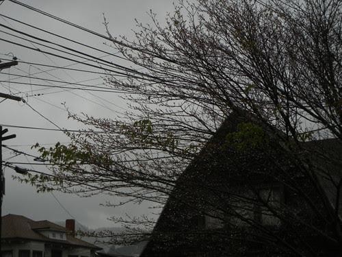 DSCN8066 _ After the Rain