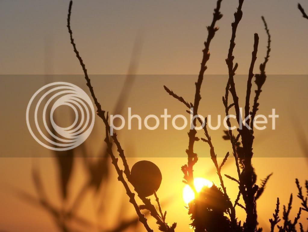 Risultati immagini per immagini L'alba di un nuovo mattino