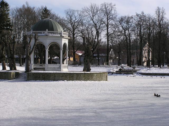 Swan bond in Kadrioru Park