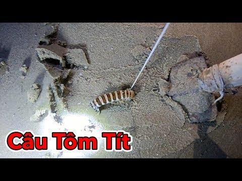 Lâm Vlog - Câu Tôm Tít Tại Biển Vũng Tàu | Catch Mantis Shrimp