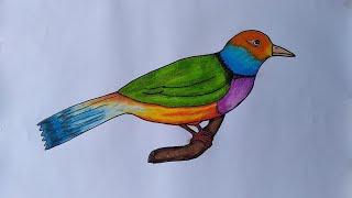 460 Gambar Burung Cendrawasih Untuk Mewarnai Gratis Terbaik