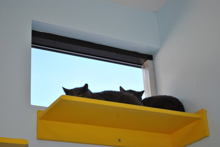 two feral cats on a window ledge