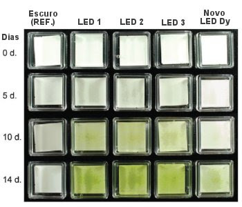 LED emite luz invisível para as plantas