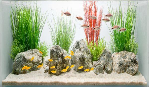 Fish Tank Interior Design Ideas - Dream Home DIY