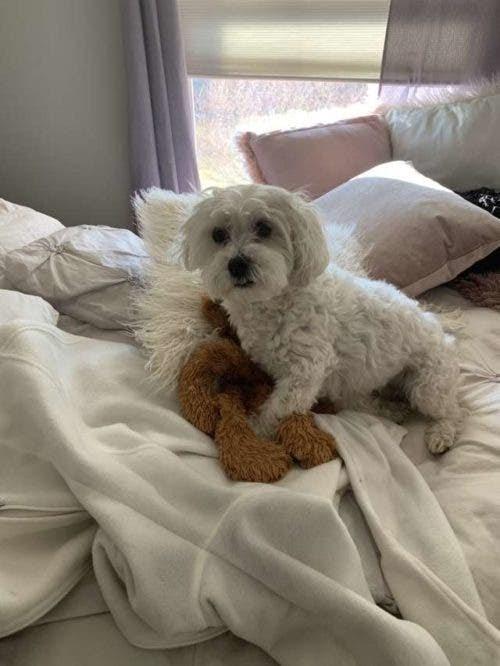 """Papá """"rescata"""" al juguete favorito de su perro dejado por accidente afuera en la tormenta"""