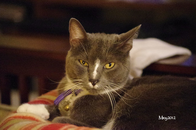 2012_09_30_2012 cats 029