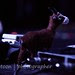 AoS-23Mar2013-JoyFormidable-0550