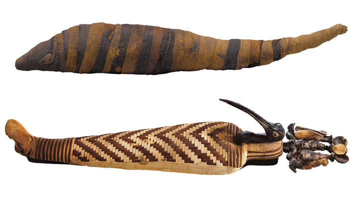 Ibis Shrew Animal Mummies