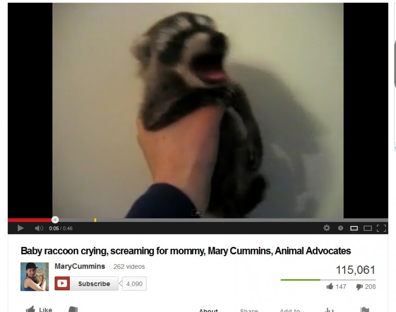800_mary_cummins_makes_a_baby_raccoon_scream.jpg original image ( 869x686)