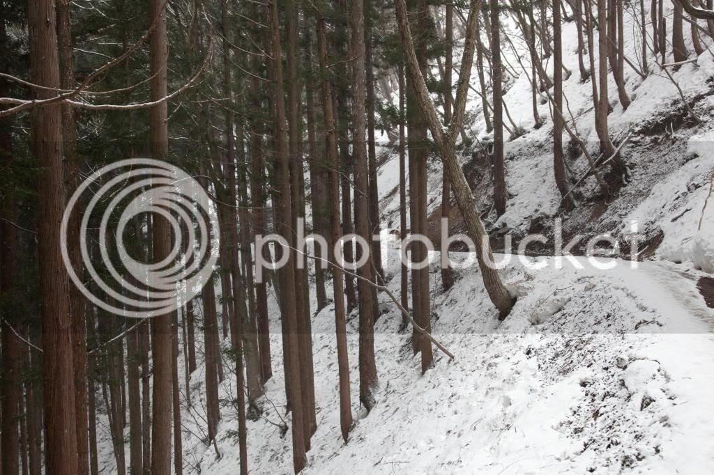 photo 20140321-IMG_1921_zps547bea32.jpg