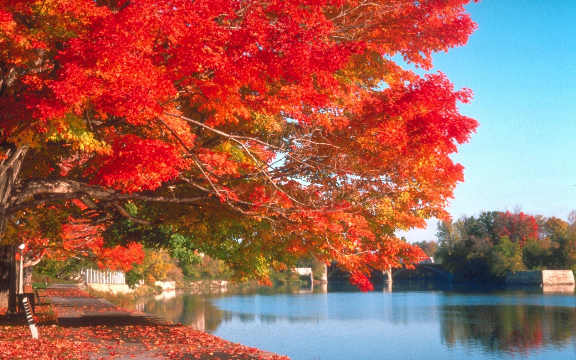 風景壁紙 無料ダウンロード 秋の風景