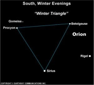 procyon orion