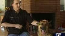 Un perro entrenado llama a emergencias y consigue salvarle la vida a su dueño
