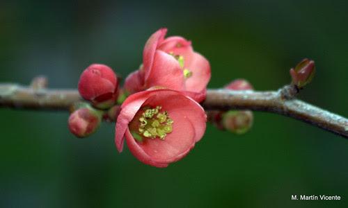La Primavera visita El Retiro