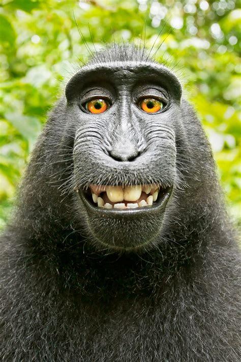 didnt    monkey selfie case
