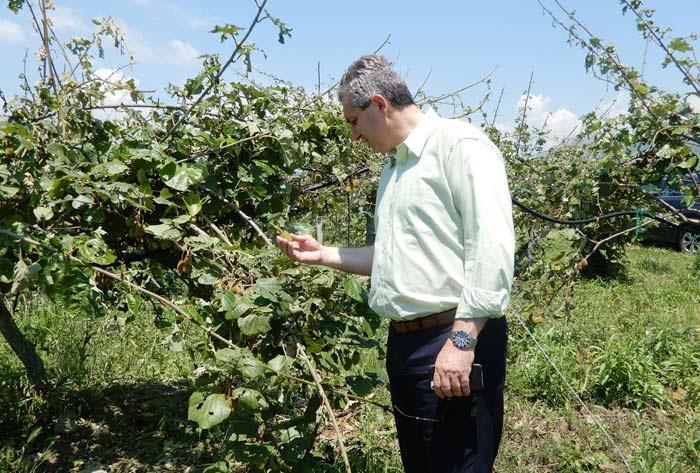 Άρτα: Άμεση καταγραφή ζημιών και καταβολή αποζημιώσεων στους καλλιεργητές ζητά ο Δήμαρχος Αρταίων