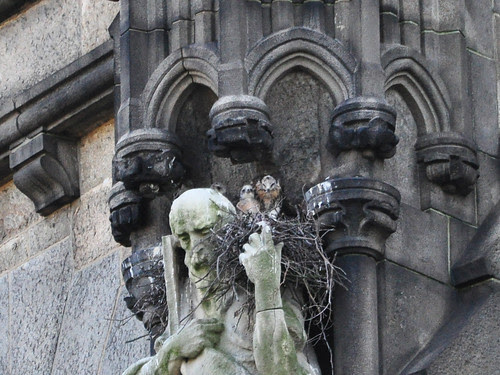 The Three Nestlings