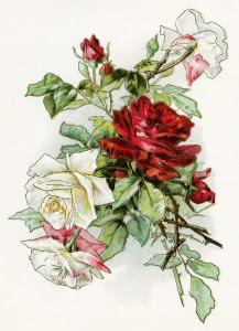 vintage clipart rose, red white roses image, vintage flowers printable, old fashioned floral illustration, free digital download rose
