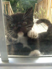 'Bring the milk out or let me in!'