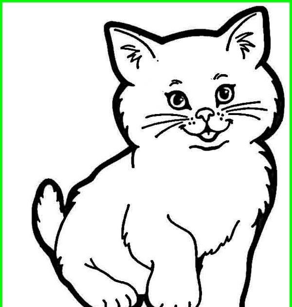 Gambar Kucing Comel Hitam Putih Kucingcomel Com