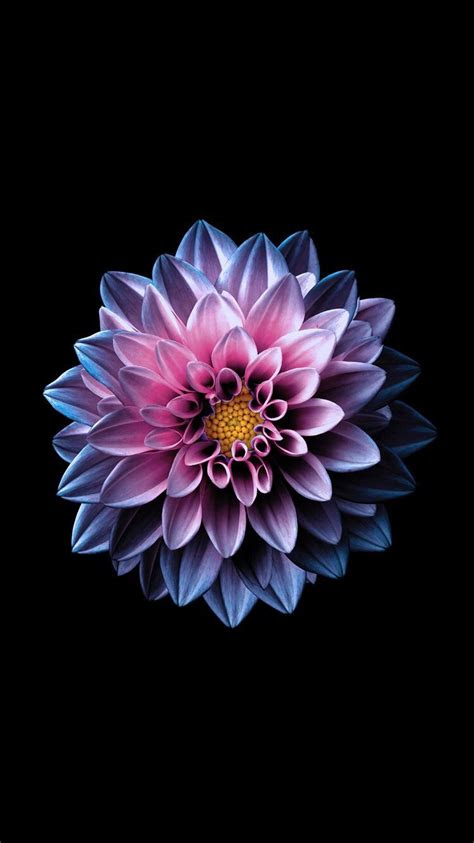 bright flower wallpaper   ipad  everpix