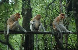 730 Koleksi Gambar Hewan Hutan Gratis Terbaru
