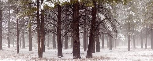 """Forest-Spirit Zion National Park, Utah"" By Robert Park  http://www.robert-park.com by Robert Park Photography"