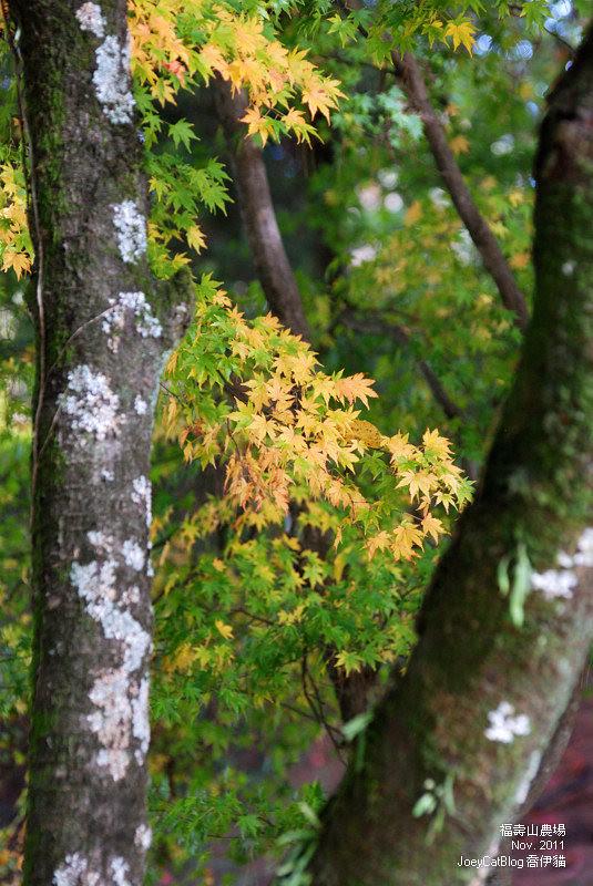 2011_1106福壽山農場DSC_3311