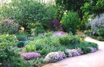 Gardening With Ca Natives Ucce Master Gardeners Of San Joaquin County