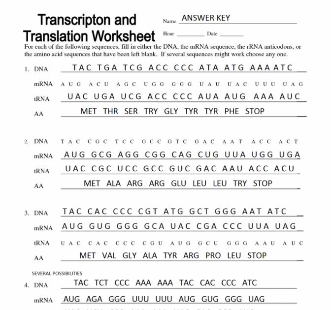 Dna Mutations Practice Worksheet Answer Key - worksheet